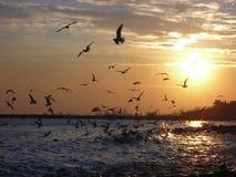 Puesta del sol con las gaviotas de mar Foto de archivo libre de regalías