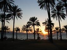 Puesta del sol con las palmas Foto de archivo