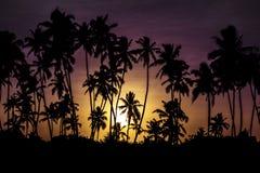 Puesta del sol con las palmas imagen de archivo libre de regalías