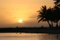 Puesta del sol con las palmeras Fotos de archivo