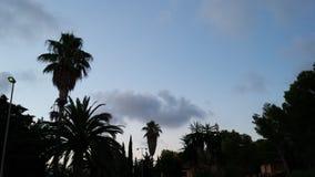 Puesta del sol con las palmeras foto de archivo
