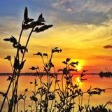 Puesta del sol con las plantas Fotos de archivo libres de regalías