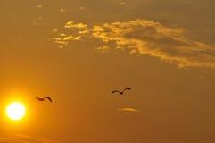 Puesta del sol con las siluetas de gaviotas Imagenes de archivo