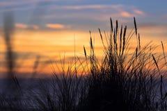 Puesta del sol con las siluetas de la hierba Foto de archivo
