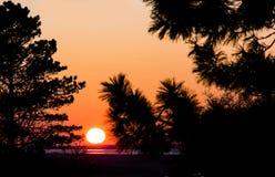 Puesta del sol con las siluetas del árbol Imágenes de archivo libres de regalías