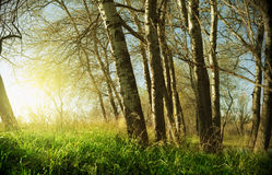 Puesta del sol con los árboles Fotos de archivo