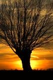 Puesta del sol con los árboles Imagenes de archivo