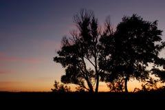 Puesta del sol con los árboles Imagen de archivo libre de regalías
