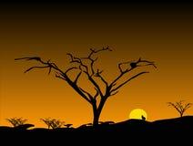 Puesta del sol con los árboles descubiertos Foto de archivo