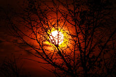 Puesta del sol con los árboles silueteados Fotografía de archivo