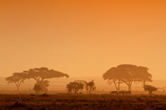Puesta del sol con los árboles silueteados Foto de archivo