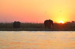 Puesta del sol con los elefantes fotos de archivo