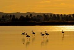 Puesta del sol con los flamencos Foto de archivo libre de regalías