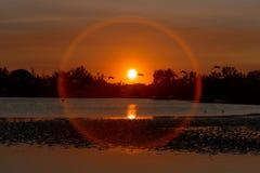 Puesta del sol con los flamencos Fotografía de archivo