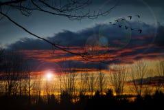 Puesta del sol con los gansos Imagenes de archivo