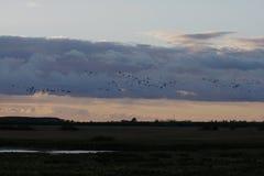 Puesta del sol con los pájaros Foto de archivo libre de regalías
