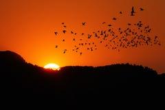 Puesta del sol con los pájaros Imágenes de archivo libres de regalías