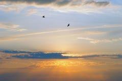 Puesta del sol con los pájaros en la distancia Imagen de archivo