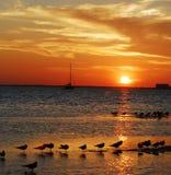 Puesta del sol con los pájaros y el barco de vela Imagen de archivo