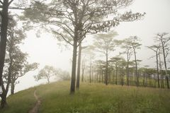 Puesta del sol con niebla en el bosque Phu Soi Dao National Park del árbol de pino, imagen de archivo