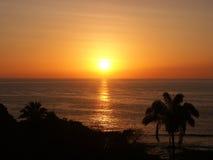 Puesta del sol con palmtrees fotos de archivo