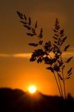 Puesta del sol con primero plano Foto de archivo libre de regalías