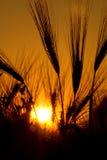 Puesta del sol con primero plano Fotografía de archivo