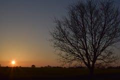 Puesta del sol con un árbol Imagenes de archivo