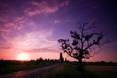 Puesta del sol con un árbol foto de archivo libre de regalías
