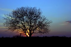 Puesta del sol con un árbol Imagen de archivo