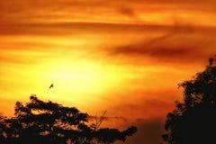 Puesta del sol con un vuelo del pájaro imagenes de archivo