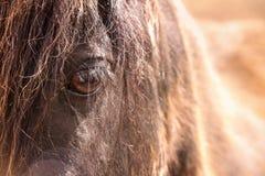 Puesta del sol con una opinión del ojo del ` s del caballo foto de archivo