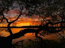 Puesta del sol con una silueta del árbol Fotografía de archivo