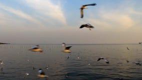 Puesta del sol con volar de las gaviotas almacen de video
