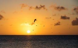 Puesta del sol con volar de los pájaros Imagen de archivo