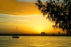 Puesta del sol contra Casuarina Fotografía de archivo libre de regalías