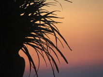 Puesta del sol contra una planta Imagen de archivo libre de regalías