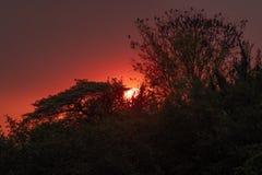 Puesta del sol de Afican fotografía de archivo libre de regalías