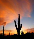 Puesta del sol de Arizona Imágenes de archivo libres de regalías