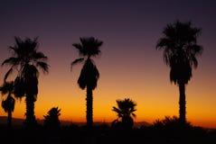 Puesta del sol de Arizona con las palmas Imagenes de archivo