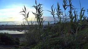 Puesta del sol de bambú 3 Cardiff Ca almacen de video