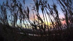 Puesta del sol de bambú Cardiff California almacen de metraje de vídeo