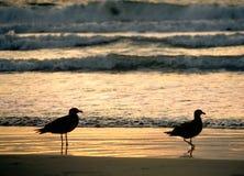 Puesta del sol de dos gaviotas Foto de archivo libre de regalías