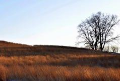Puesta del sol de enero en la conservación de papa Farm Fotos de archivo libres de regalías