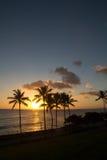 Puesta del sol de Hawaii con la silueta de la palmera Fotografía de archivo