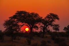 Puesta del sol de Kalahari Imagen de archivo libre de regalías