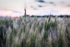 Puesta del sol de Kansas Fotos de archivo libres de regalías