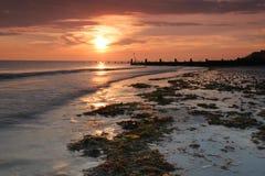 Puesta del sol de la alga marina Fotografía de archivo libre de regalías