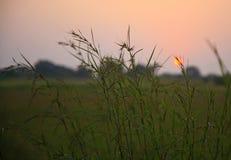 Puesta del sol de la almeja Fotos de archivo libres de regalías