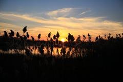 Puesta del sol de la bahía en nuevo Englang Imagenes de archivo